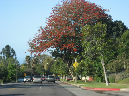 Tree_on_sunset_2