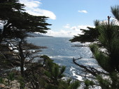 Pebble_beach_trees_ocean